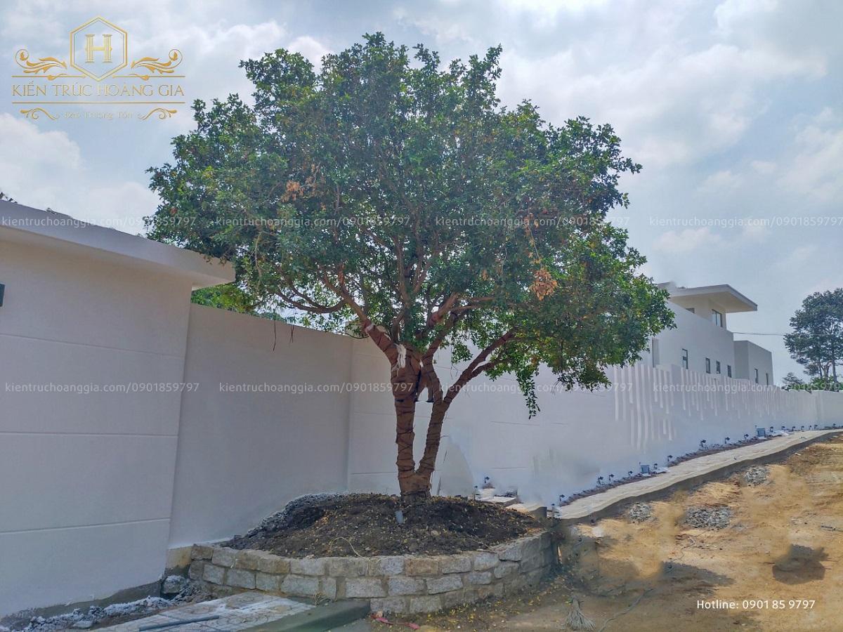Biệt thự sân vườn hiện đại mở ra với thiên nhiên tách biệt khỏi con đường ồn ào tại Vũng Tàu